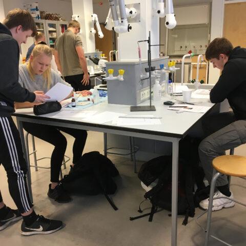 Elever samarbejder omkring et forsøg